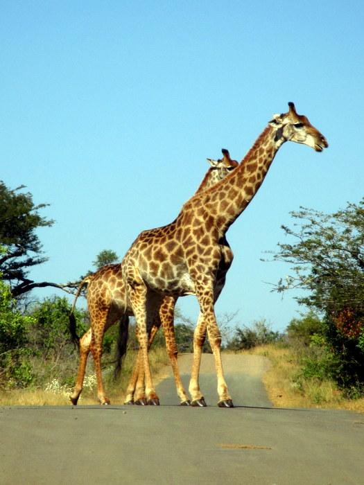 Hluhluwe safari experience