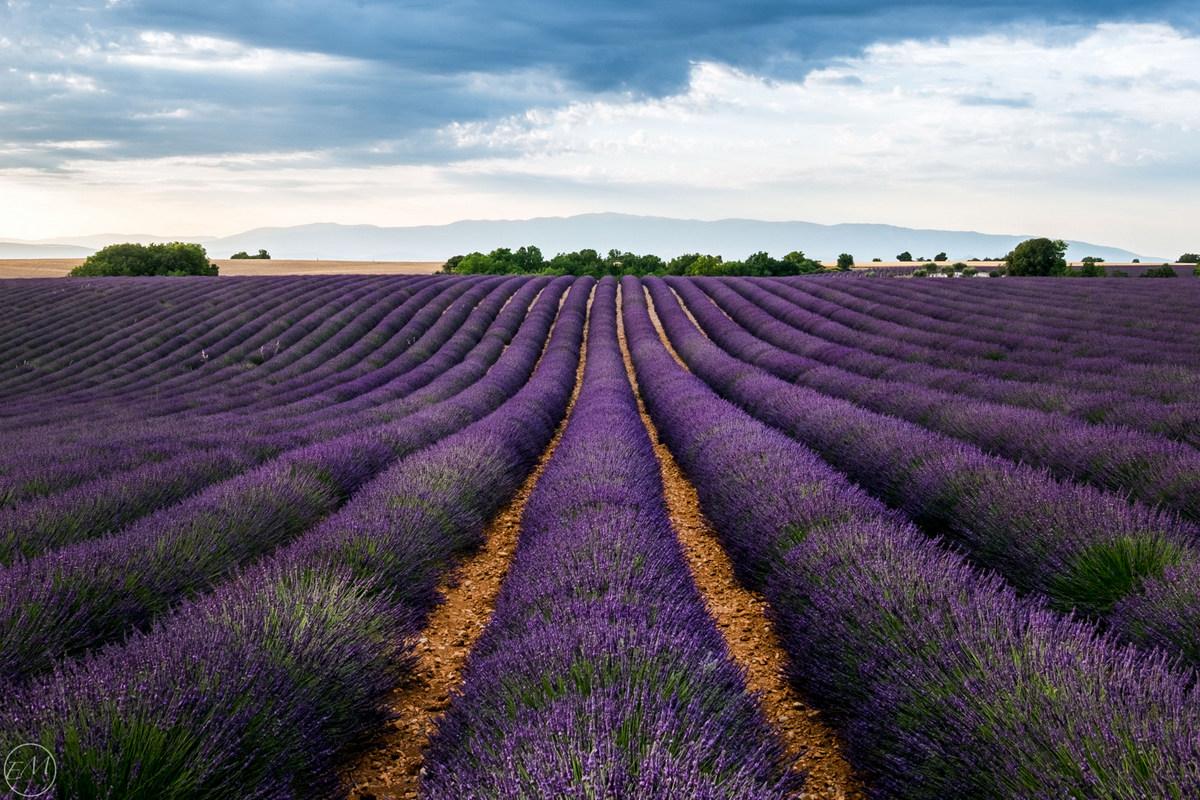 Roadtrip en Provence d'1 semaine pendant la floraison des ...
