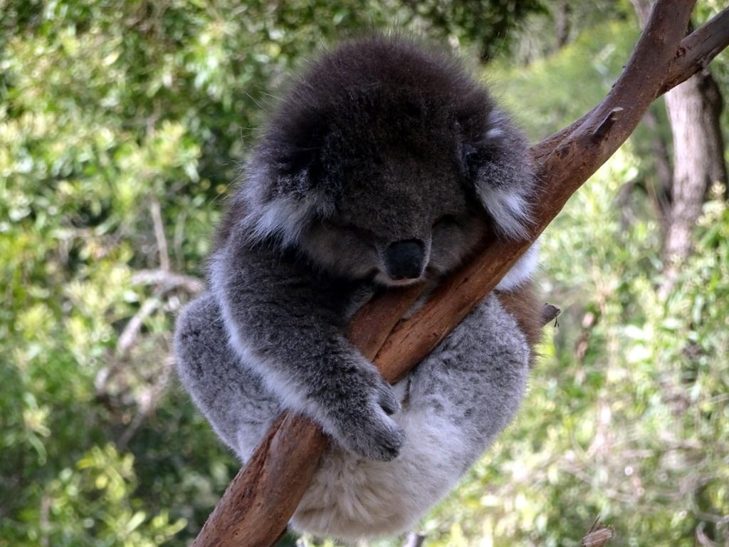 Australie: 10 jours entre ciel et mer