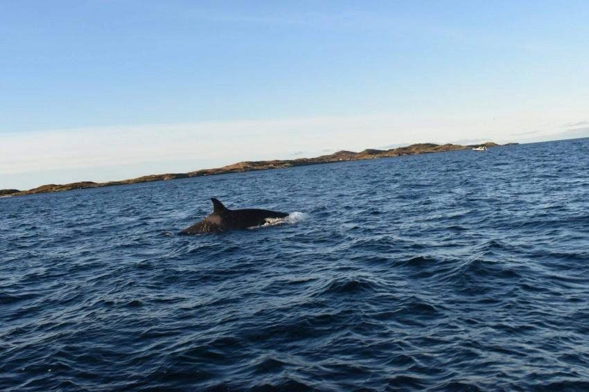 tromso-baleine