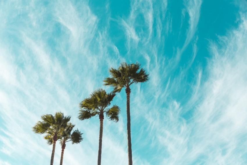 Ambiance californienne!